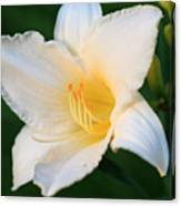 White Temptation Lily Canvas Print