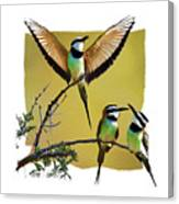 White Throated Bee Eater Pf Canvas Print