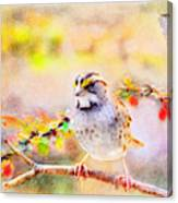 White Throated Sparrow - Digital Paint 1                                             Canvas Print