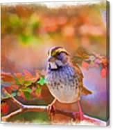 White Throated Sparrow - Digital Paint 3 Canvas Print