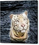 White Tiger 20 Canvas Print