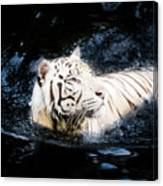 White Tiger 21 Canvas Print