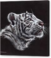 White Tiger Cub Canvas Print