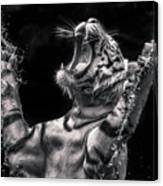 White Tiger Featured In Greece Exhibition Canvas Print