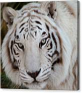 White Tiger Portrait Canvas Print