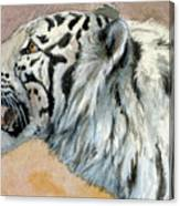 White Tigress Aceo Canvas Print