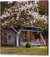 White Tree And Old Barn Canvas Print