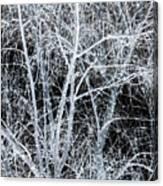 White Tree Black Night Canvas Print