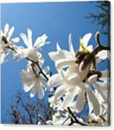 White Tree Flowers Art Prints Magnolia Blue Sky Floral Baslee Troutman Canvas Print
