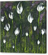 White Tulip Garden Canvas Print