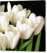 White Tulips 1 Canvas Print