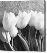White Tulips Against Wallpaper Canvas Print