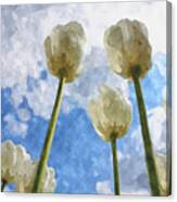 White Tulips And Cloudy Sky Digital Watercolor Canvas Print