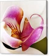 White Veil Orchid Canvas Print
