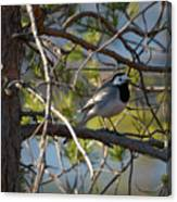 White Wagtail 2 Canvas Print