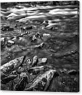 White Water Bw Canvas Print