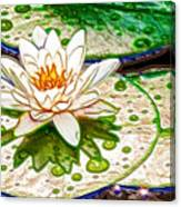 White Water Lilies Flower Canvas Print