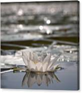White Waterlily 3 Canvas Print