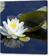 White Waterlily Canvas Print