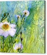 White Wild Poppies Canvas Print