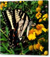 White Wing Butterfly Canvas Print
