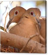 White-winged Doves In Lovebird Pose Canvas Print