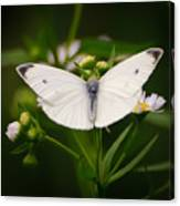 White Wings Of Wonder Canvas Print
