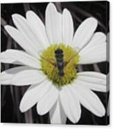 White With Bee Canvas Print