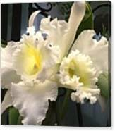 White With Yellow Orchids  Canvas Print