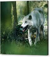 White Wolf Walking In Forest Canvas Print