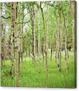 White Woods Canvas Print
