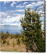 Whitebark Pine Trees Overlooking Crater Lake - Oregon Canvas Print