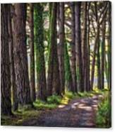 Whiteford Burrows Woods Canvas Print