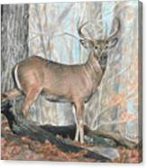 Whitetail Buck Canvas Print