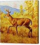 Whitetail Deer In Aspen Woods Canvas Print