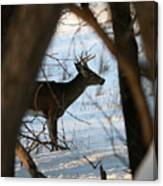Whitetail Deer Threw The Trees Canvas Print