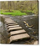 Whitewater River Spring 52 Canvas Print