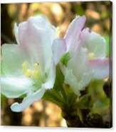 Who Here Has Seen Apple Blossoms In Late Summer Canvas Print