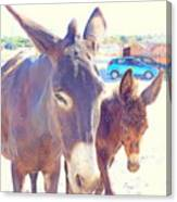 Who Wants A Blue Car When You Can Have Donkeys Canvas Print