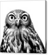 Whoo You Callin A Wise Guy Canvas Print