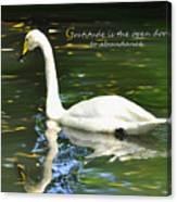 Whooper Swan Gratitude Canvas Print