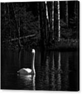 Whooper Swan In Bw 1 Canvas Print