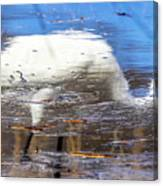 Whooping Crane Reflection Canvas Print