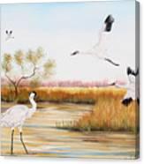 Whooping Cranes-jp3151 Canvas Print