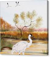 Whooping Cranes-jp3152 Canvas Print