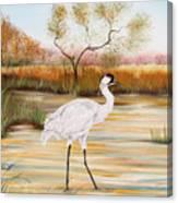 Whooping Cranes-jp3156 Canvas Print