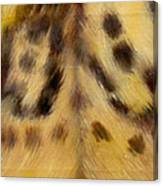Whos Watching Who Jaguar Canvas Print