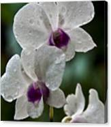 Whte Orchids Canvas Print