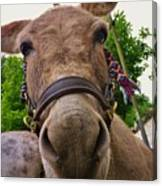 Why The Long Face? Canvas Print