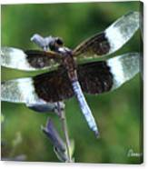 Widow Skimmer Dragonfly Canvas Print